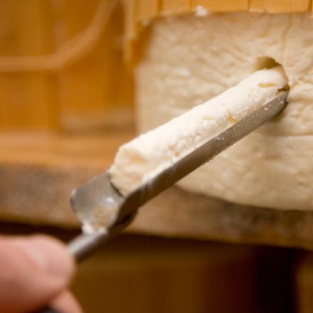 operazione di carotatura su una forma di gorgonzola